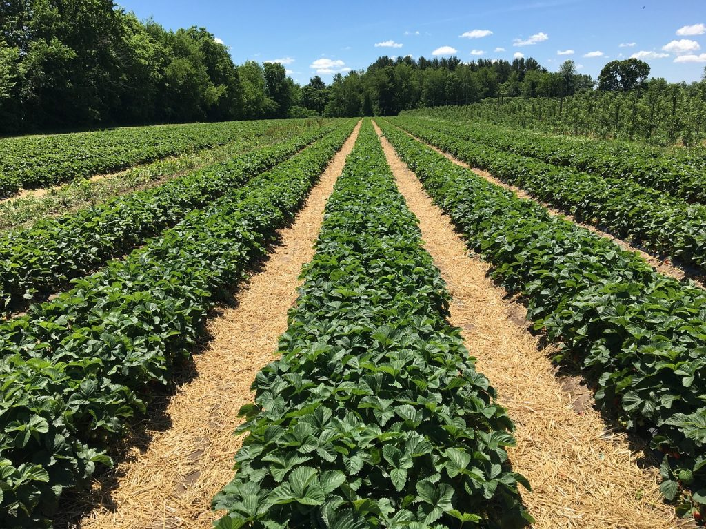 Organik Tarım ve Organik Sertifikalar
