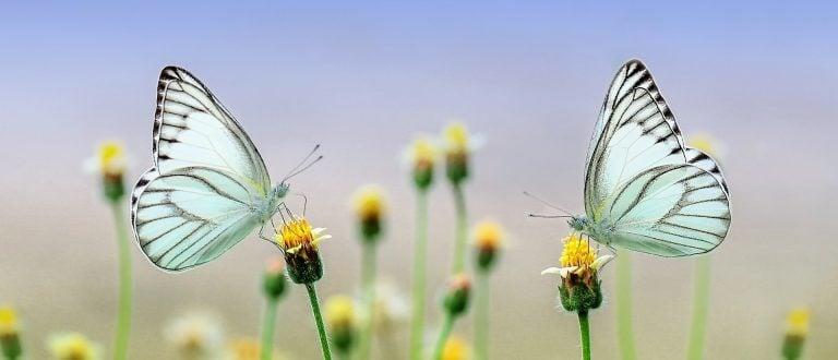 Doğal, Doğal Yaşam Tanımları ve Doğala Özlem
